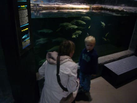 Sea Life Center Konstanz - SEA LIFE Konstanz