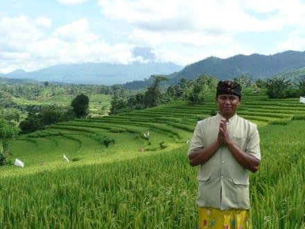 Reisterrassen auf Bali - Reisterrassen