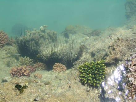 Riff des Coral Beach - Tauchen Safaga