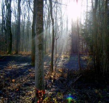 Novembersonne - Plattling