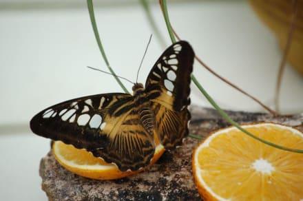 Schmetterlingsfarm - Schmetterlingsfarm