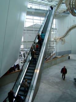 Eingangshalle Ozeaneum - Ozeaneum