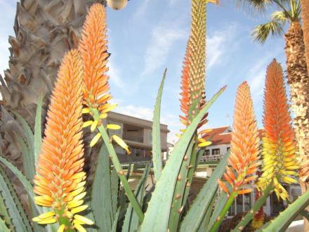 Schöne Blüten - Ermita de San Telmo