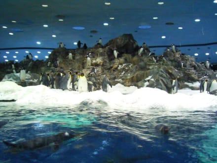 Pinguine auf dem Eisberg - Loro Parque