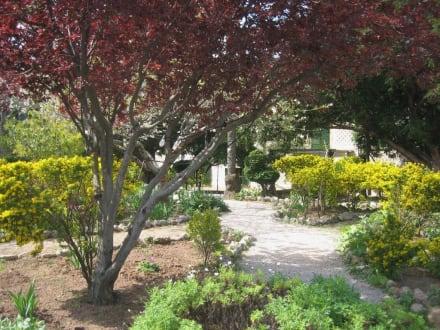 Miramar - zauberhafter Garten - Monestir de Miramar