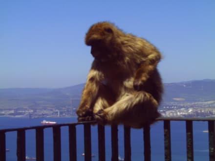 Gibraltar - Affenfelsen und St. Michael's Cave
