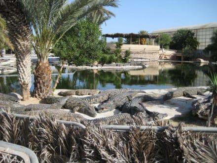 Krokodilefarm - Djerba Explore Parc