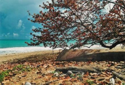 Einsamer Strand - Strand Las Terrenas