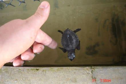 Schildkrötenfarm - Schildkrötenfarm