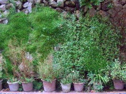 verschwenderisches Grün überall - La Granja