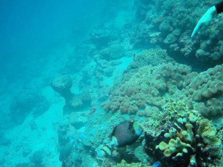 Tagestour mit Poseidon-Cruises - Poseidon Cruises