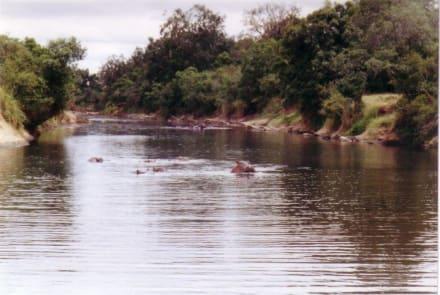 bei Hitze in's Wasser, - Masai Mara Safari