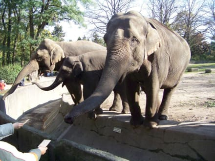 Tropenaquarium Hagenbeck - Tierpark Hagenbeck