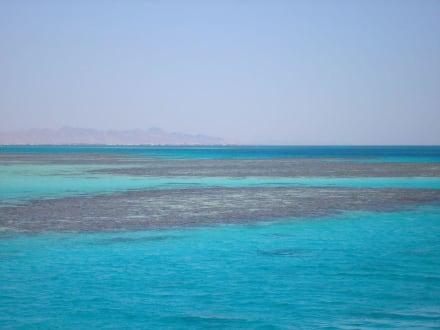 Korallenriffe - Giftun / Mahmya Inseln