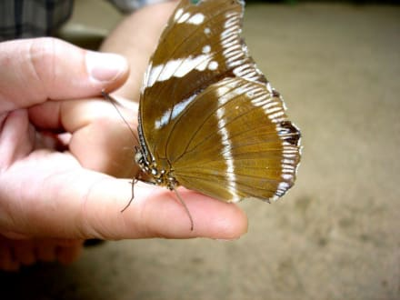 Schmetterlingspark Elne - Schmetterlingspark Elne