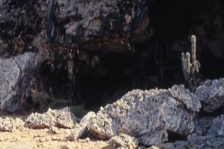 Die Indianerhöhle bei ONIMA - Rundfahrt Insel Bonaire