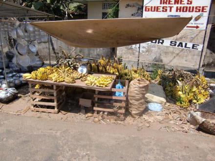 Immer wieder Gemüse - Grüner Markt - Wochenmarkt