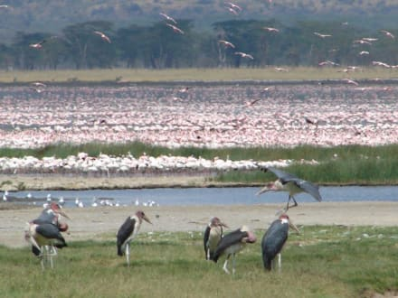 Flamingos und Marabu - Lake Nakuru Nationalpark