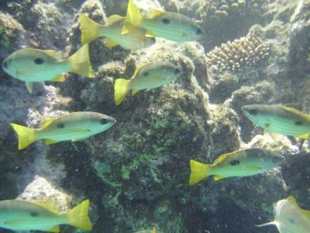 Unterwasserfoto - Delfin Tour Marsa Alam