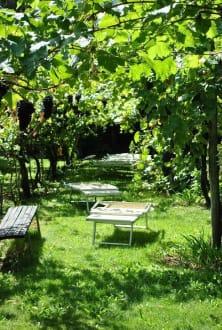 Unter Weinreben - Aparthotel Gartenresidence Nalserhof
