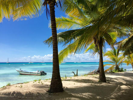 Strand - Isla Saona