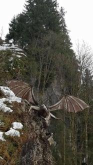 Der Drache begegnete uns auf einem Spaziergang - Schwarzsee