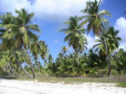 Insel Saona/ direkt am Strand - Isla Saona