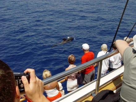 Wale - Teneriffa - Whale Watching Playa de las Americas