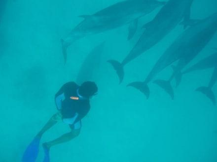 Yasser mit Delfinen - Ausflug mit Mohamed