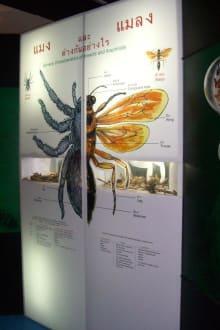 Erläuterung... - Phuket Butterfly Garden & Insect World