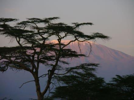 Kilimanjaro im beginnenden Sonnenuntergang - Kimana Reservat