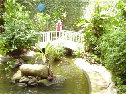 In der Schmetterlingsfarm - Phuket Butterfly Garden & Insect World