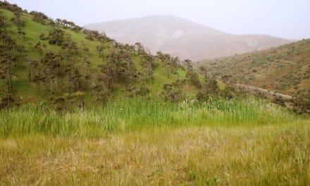 Blick auf den Wald - Wandern TimeforNature Tarajalejo