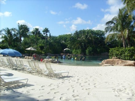 Delfinbereich - Discovery Cove