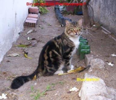 Prachtexemplar - Tierhilfestation Rhodos-Stadt