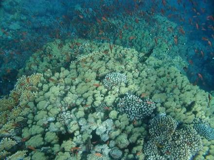 Rifflandschaft  - Tauchen Makadi Bay