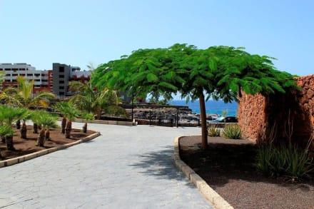 Gartenanlage - Clubhotel RIU Buena Vista