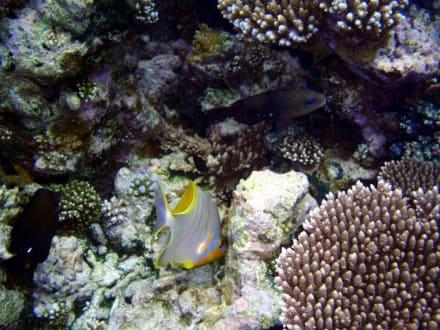 Unter Wasser - Tauchen Ari Atoll