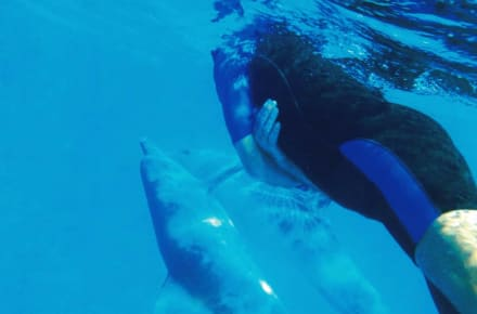 Die Delfine selbst entscheiden lassen... - SimSim-Reisen