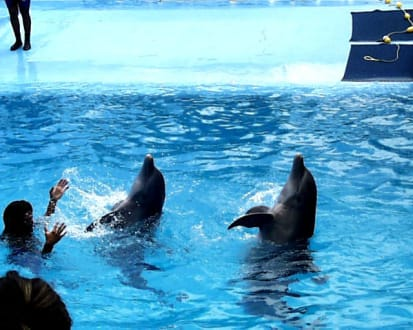 Delfinen Show - Manati Park Bavaro