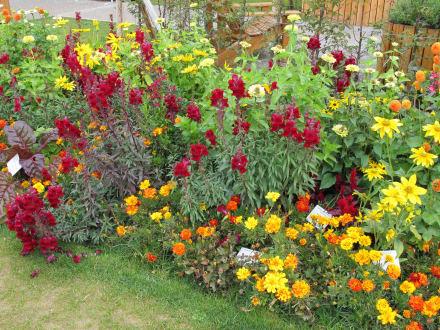 herbstblumen bild landesgartenschau 2012 in nagold. Black Bedroom Furniture Sets. Home Design Ideas