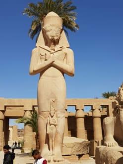 2 Tagestour Luxor - Delfinausflug mit Mo