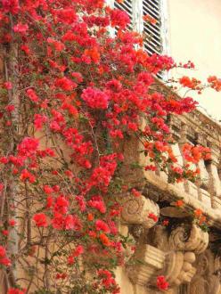 Blumenpracht - Altstadt Tropea