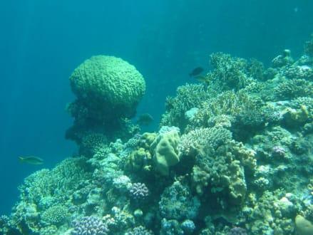 Unterwasserwelt am Außenriff! - Tauchen El Quseir