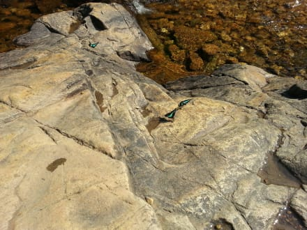 Echt interessante Tiere - Klong Plu Wasserfall