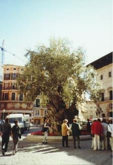 Palma/ Altstadt/ Mallorca - Altstadt Palma de Mallorca