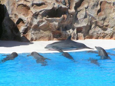 Delfinshow im Loro Park - Loro Parque
