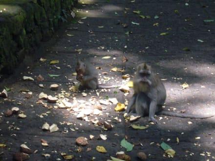 Monkey Forest - Affenwald Ubud