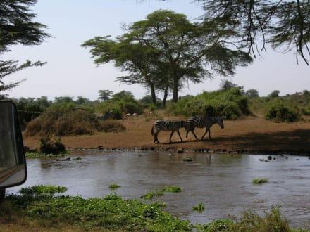 Zebras - Kimana Reservat