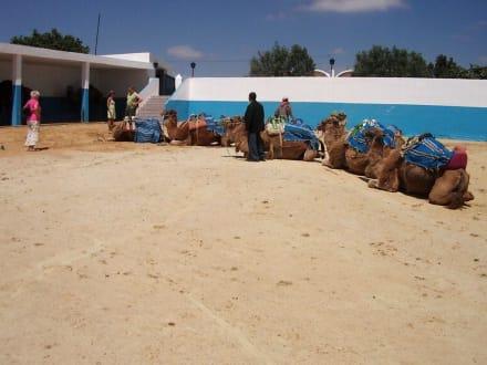 Gepflegter Reitstall! - Kamelreiten Nabeul